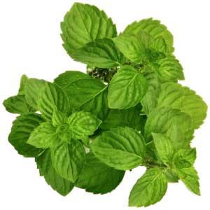 spearmint essential oil pure