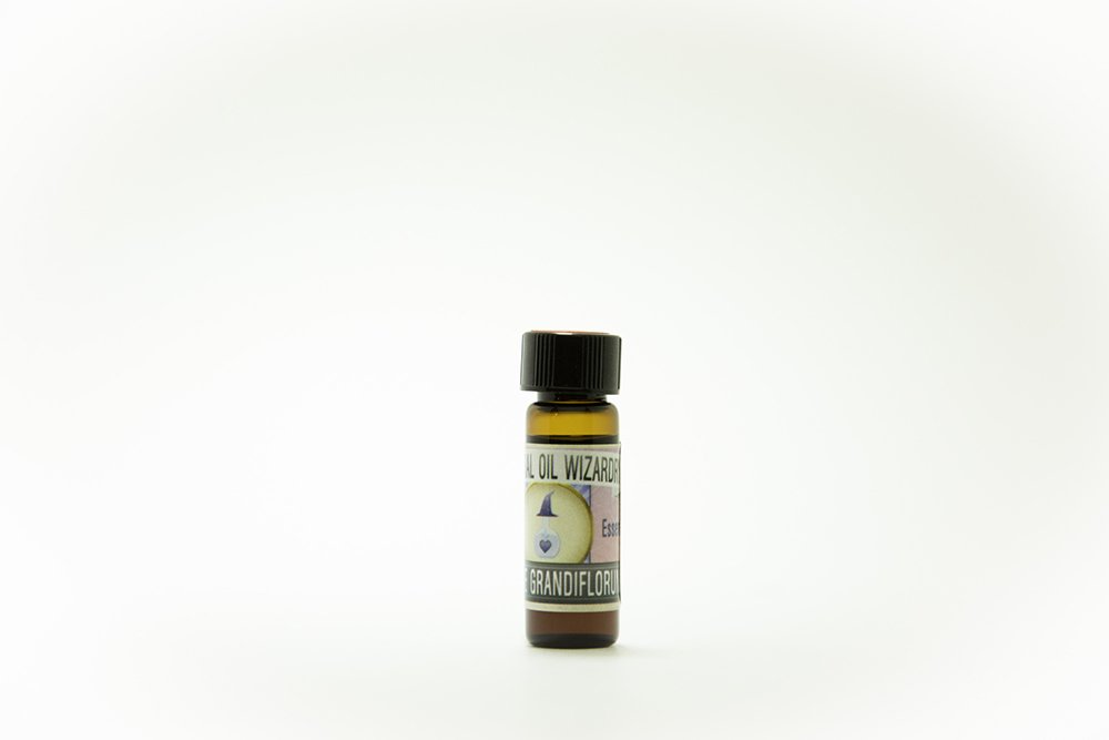 jasmine grandiflorum essential oil pure