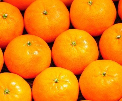 orange essence essential oil pure