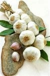 CO2 Garlic
