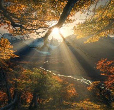 AM Shine