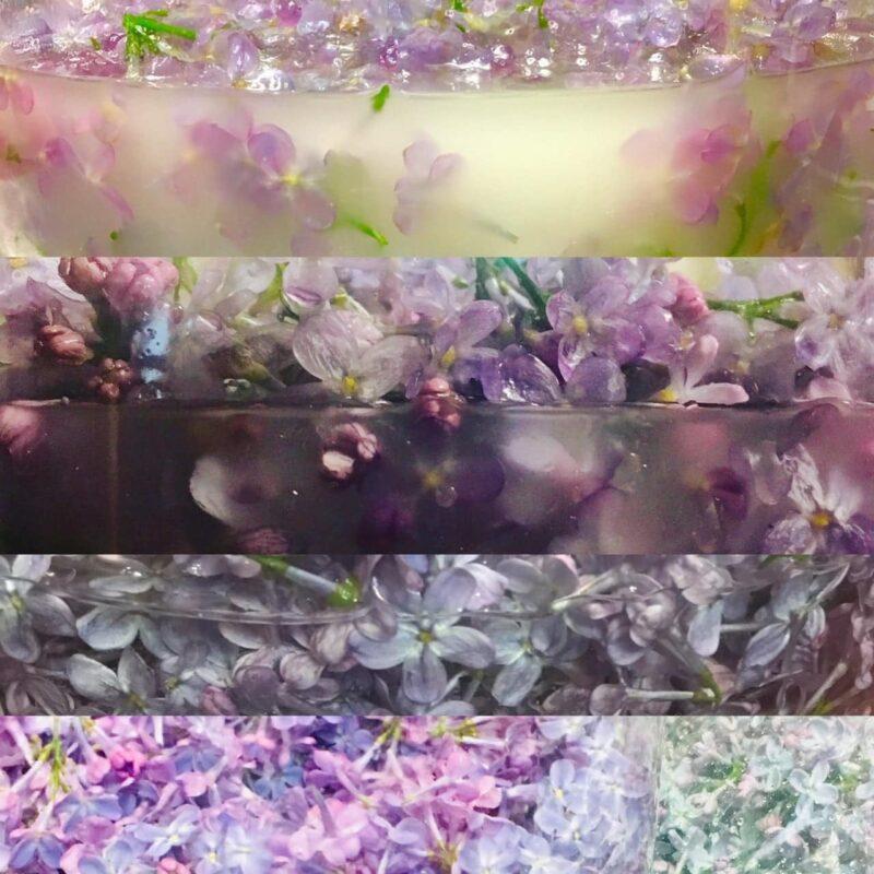 Lilac Tincture