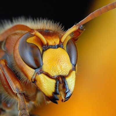 Bug Repel