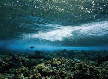 Coral Waves