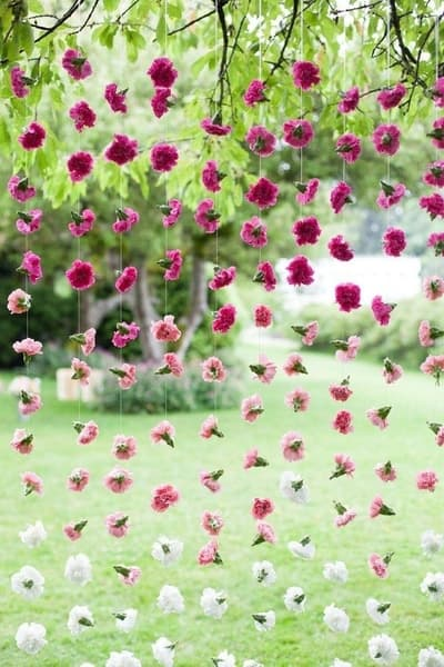 Carnation Dreams