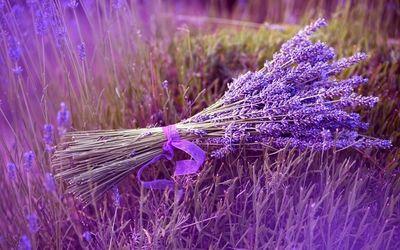 Lavender Essential Oil Set